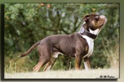 Renascence Bulldogge